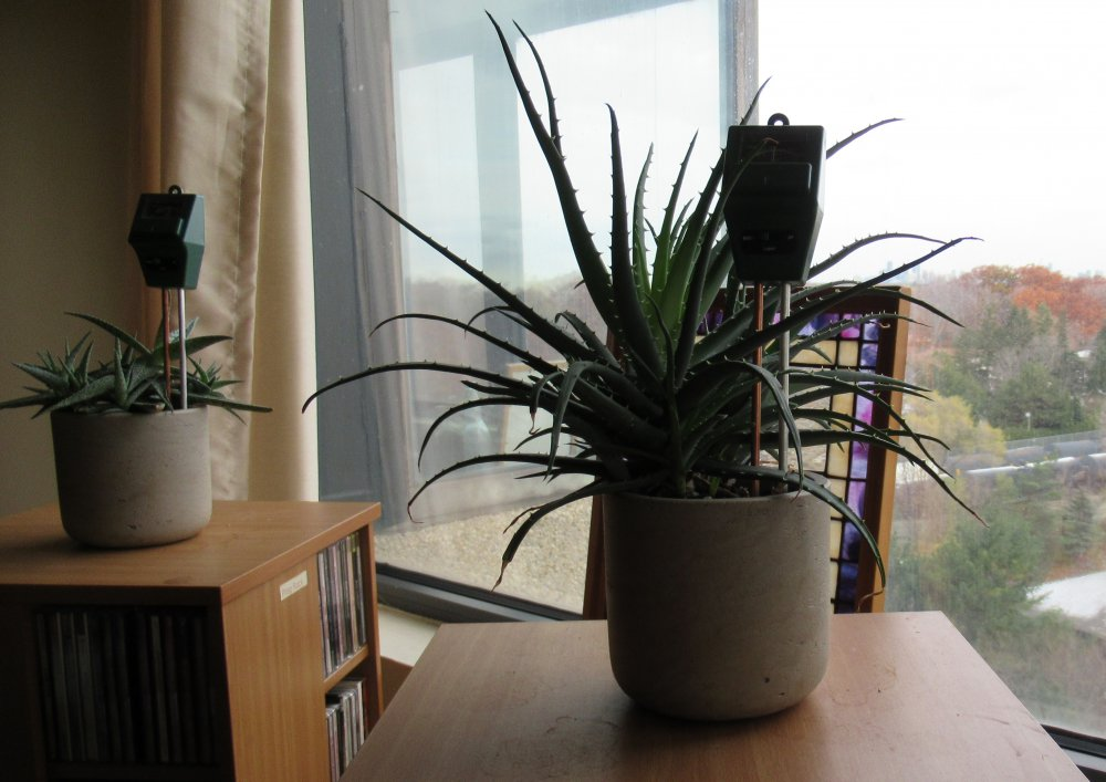 cactus-garden-3.jpg